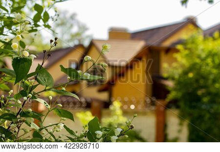 Gardening In A Country House. Garden Fruit Trees In A Cottage Village.