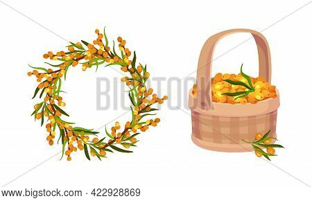 Sea Buckthorn Berry Rested In Wicker Basket And Arranged In Wreath Vector Composition Set
