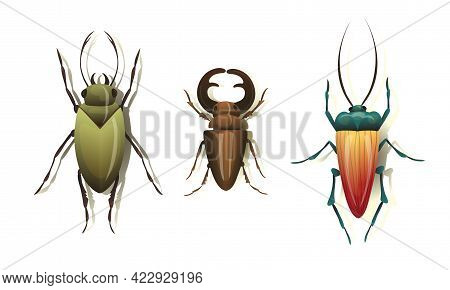 Bugs And Beetle As Coleoptera Insects With Elytra Vector Set