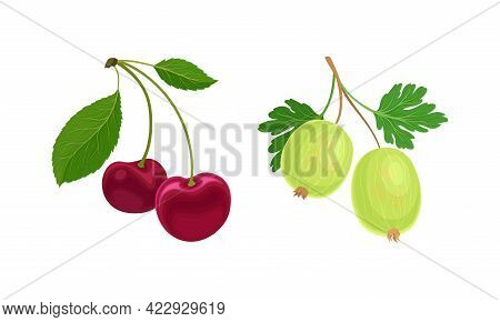 Cherry And Gooseberry Branch With Berries And Green Fibrous Leaves Vector Set