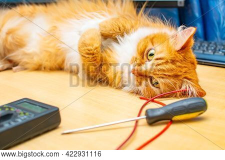 A Red Furry Siberian Cat With Bright Yellow Eyes Lies On A Work Desk Near A Computer And Keyboard Ne