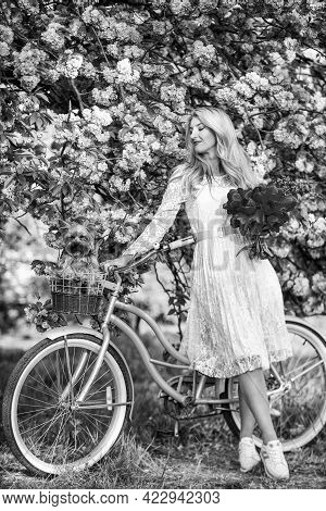 Healthy Lifestyle. Woman In Garden. Sakura Tree Blooming. Spring Holidays. Transportation And Travel