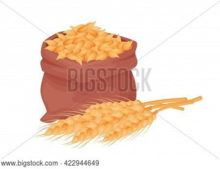 Sack With Wheat, Barley Grains, Seed Of Wheat In A Burlap Bag With Spikelets Wheat Isolated On White