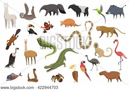Animals Of South America. Nature Fauna Collection. Geographical Local Fauna. Mammals Living On Conti
