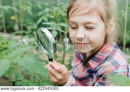 Handsome Kid Girl Naturalist Scientist Explores Plant Life And Insect Life With Magnifying Glass. Bo