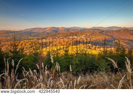 Rural Landscape With Forests In Autumn Colors At Sunset.