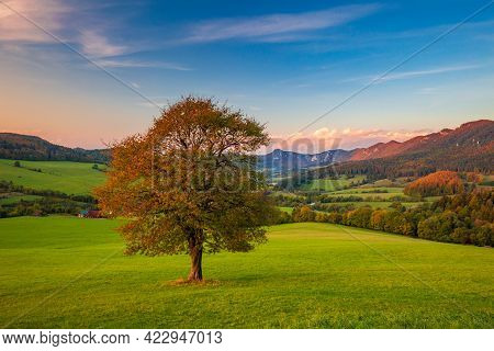 A Beautiful Deciduous Tree In The Foreground Of The Autumn Rural Landscape At Sunset. National Natur