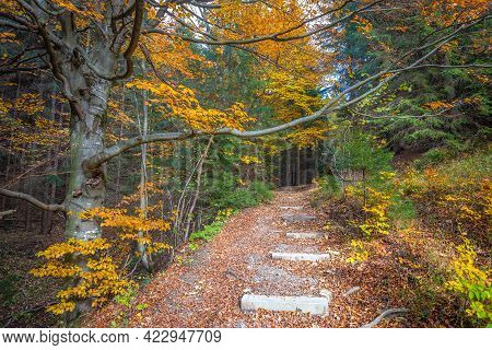 Walkway Through The Forest With Trees In Autumn Colors.