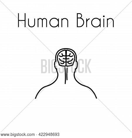 Human Brain Linear Medical Icon With Text. Abstract Vector Illustration Of Brain In The Head. Design
