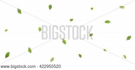 Green Leaves On White Background. Elm Tree Leaves On White. Top View. Flat Lay