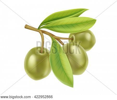 Realistic green olives branch with leaves. Extra virgin olive oil product design, natural organic cosmetics ingredient, health care products. Isolated on white transparent background. 3D illustration.