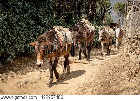 A Mule Train On The Trail From Lukla To Namche Bazaar In Nepal.