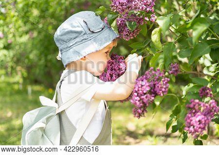 Cute Little Blonde Hair Boy Enjoying Lilac Flowers Bush In Blooming Garden, Springtime. Seasonal Kid