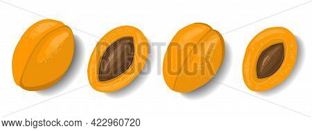 Apricots Isolated On White Background. Fruit Clipart. Element For Summer Design. Vector Illustration