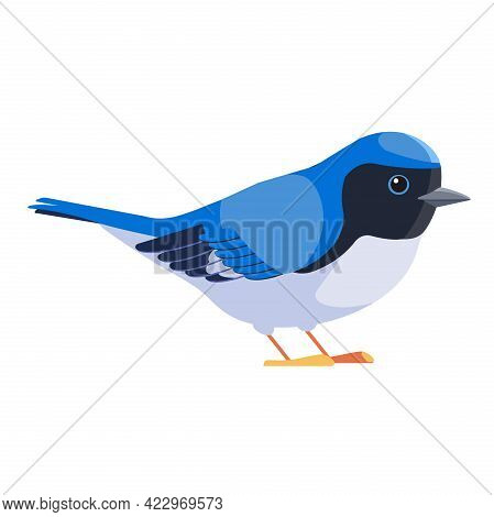 Blue Warbler Is A Small Passerine Bird Of The New World Warbler Family. Black-throated Blue Warbler