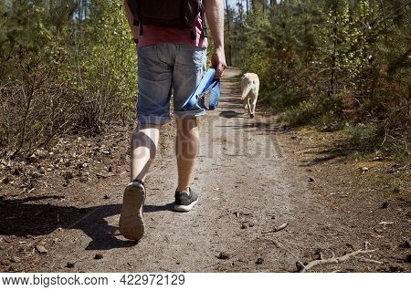 Man Walking With Dog On Footpath In Forest. Rear View Of Tourist With Labrador During Summer Trip.