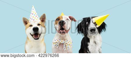 Banner Birthday Party Dog. Three Smiling Akita, Border Collie And American Staffordshire Wearing A Y