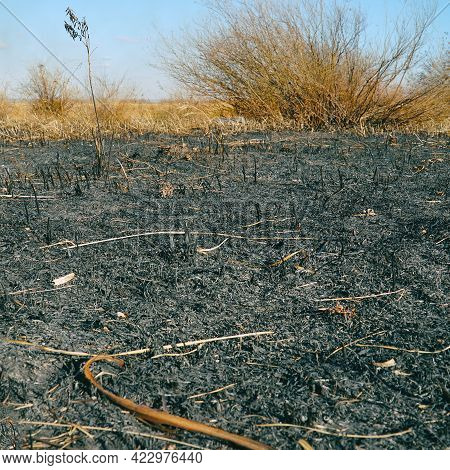 Burnt Dry Grass On The Field Close-up. Spring Fires