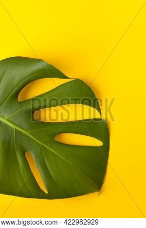 Green Monstera Leaf On A Yellow Paper - Yellow Background. Palette Of Green And Tropical Leaves Mons