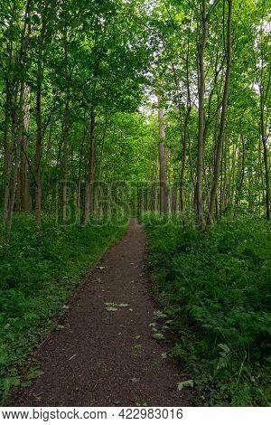 A Narrow Dirt Footpath Leading Through Dense Green Lush Forest