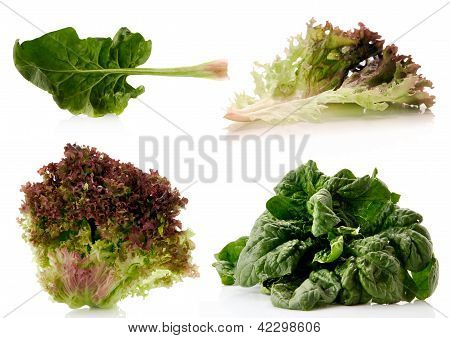 Spinach And Lettuce