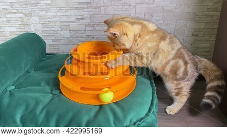 Cat Toy. Llittle Red Ginger Striped Kitten Playing With Cat Toy On Green Cat Bed. Cat Catching Balls