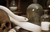 Texas rat snake on a human skull closeup poster