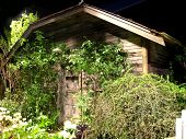 an old wooden garden shed covered in vines and bushes ** Note: Slight blurriness, best at smaller sizes poster
