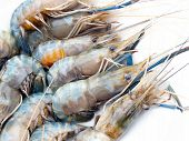 Delicious fresh shrimp seafood isolated in white poster