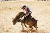bucking action during the bull rinding competition at a rodeo. poster