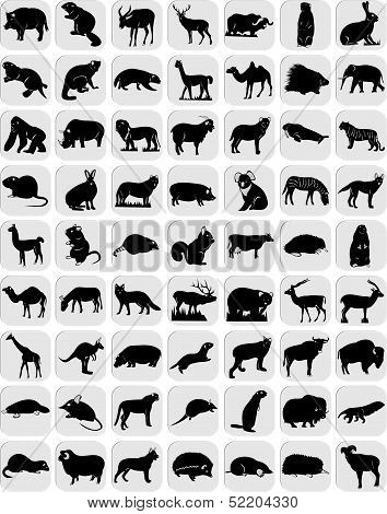Icons of animals