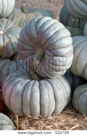 Stacked Jarrahdale Pumpkins