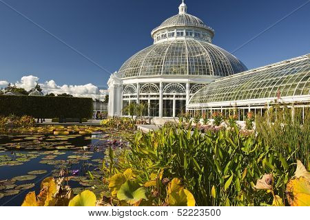 Waterlilies And Greenhouse