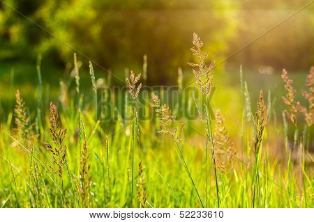 Fresh Summer Green Grass