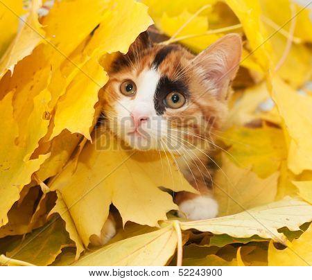 Tri-color Cat-girl