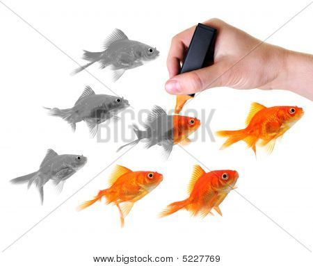 Giving Life To A Group Of Goldfish