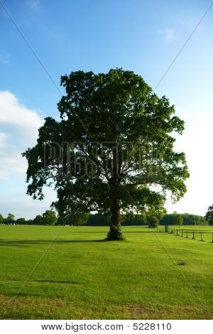 Lydiard Park Trees