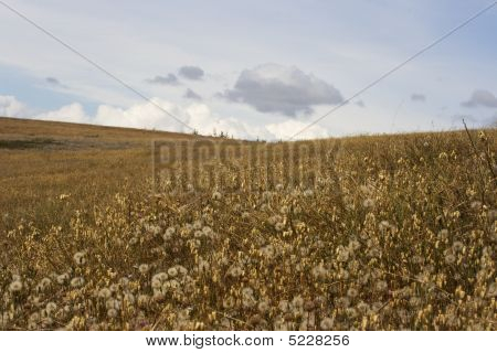 Field Of Wishes