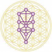The ten Sephirots of the Kabbalah fits in the Flower of Life, a geometrical figure, composed of multiple evenly-spaced, overlapping circles forming a flower-like pattern with the symmetrical structure of a hexagon. Isolated vector on white background. poster