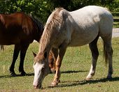 two horses grazing in a pasture near the road poster