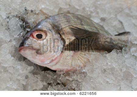fresh fish on ice for sale in the market poster