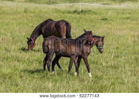 poster of photo of two young colts cuddling each other filtered and stylized to resemble an oil painting