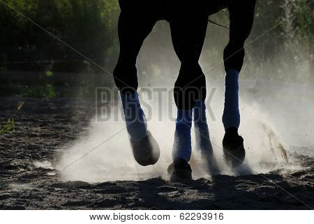 The horse is galloping along the sand