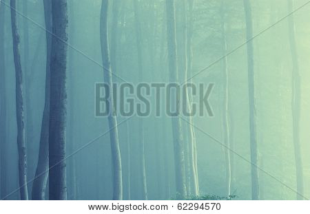 Fog and light in a surreal ethereal forest