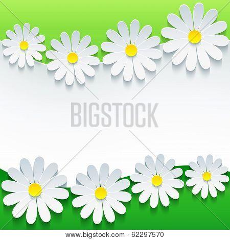 Stylish Floral Background, 3D Flower Chamomile