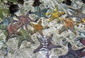 photo of group of starfish of various colors on the bottom of aquarium stylized and filtered to resemble an oil painting. poster