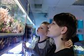 Mother and her son watching fishes at an oceanarium poster