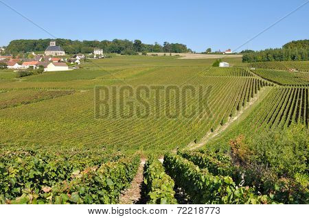 Champagne Landscape (france)