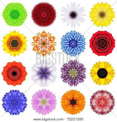 Big Collection Of Various Concentric Flowers Isolated On White