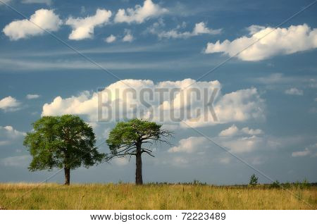 Beautiful Landscape With A  Tree